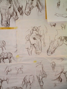 A collection of sketches of the horses